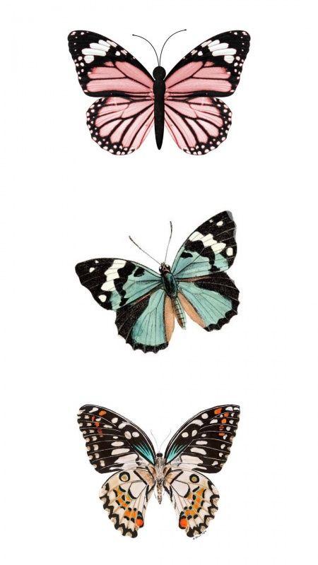 VSCO - reesebrewer   Butterfly art, Butterfly wallpaper ...