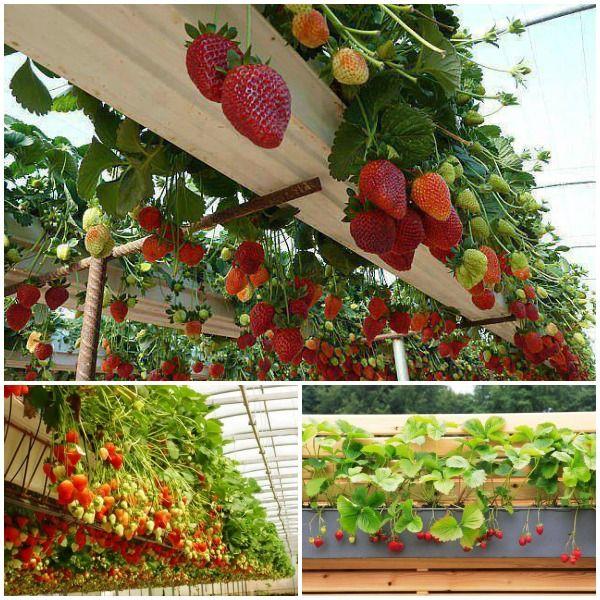 Wonderful Diy Rain Gutter Strawberry Planter See More 640 x 480