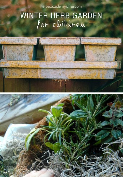 Making a child s winter herb garden ensure success for for Indoor gardening during winter
