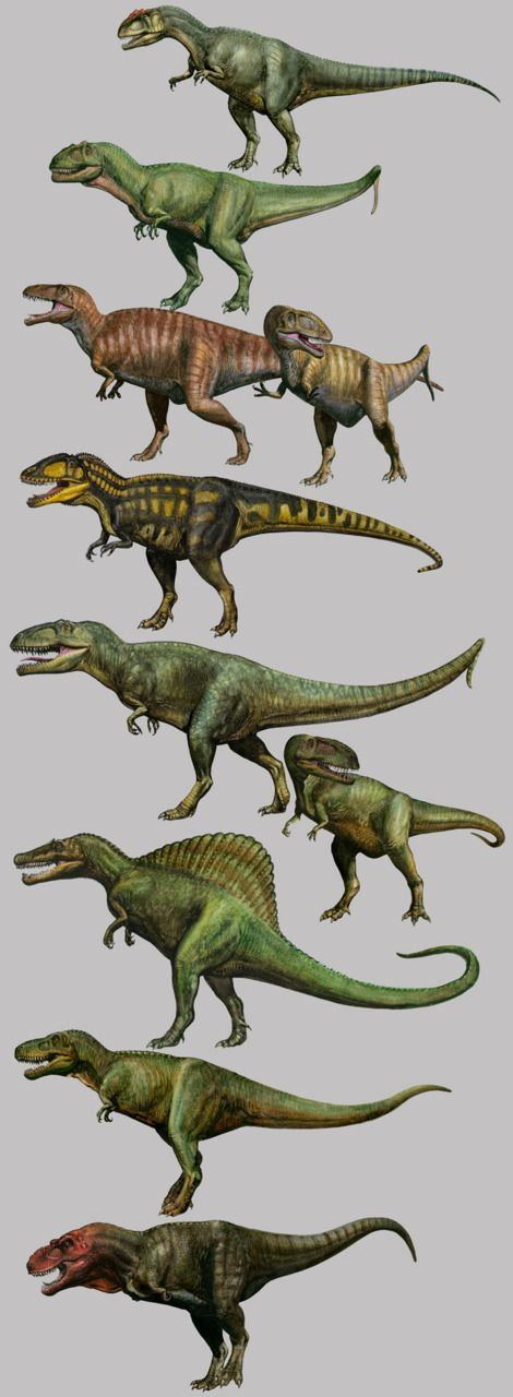 Carnivorous dinosaurs. I will try to identify them when I have the time...