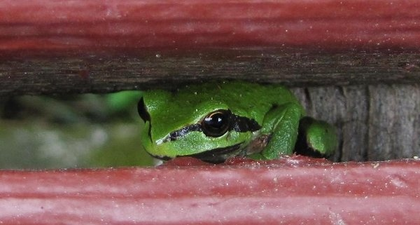 """""""Frog"""" by catsimmons, via Flickr"""