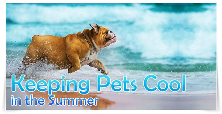 Summer is a fantastic time for pet owners to enjoy the love and companionship of their pets. Many choose to enjoy the outdoors this time of year by taking their pet to the park or beach. Although we may not think too much about how the heat can affect our pets, they are vulnerable this time of year. Sun burns, various heat injuries, and heat stress are concerns pet owners must take seriously. Learn important tips on how to keep your pet cool this summer.