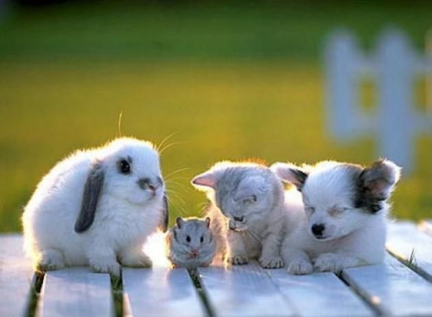 Animal Expo - cel mai mare salon de animale de companie - weekendul acesta     iepurași, pisicuțe, cațeluși, soricei