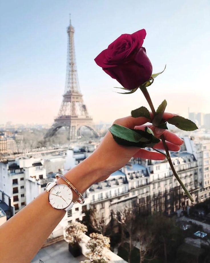 #Roses: Discovered by ♔ KSENIA ♔. Find images and videos about girl, beautiful and cool on We Heart It – the app to get lost in what you love. http://ift.tt/2t97HMc