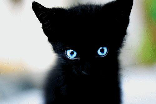 black kitten, blue eyes | Black Cats | Pinterest