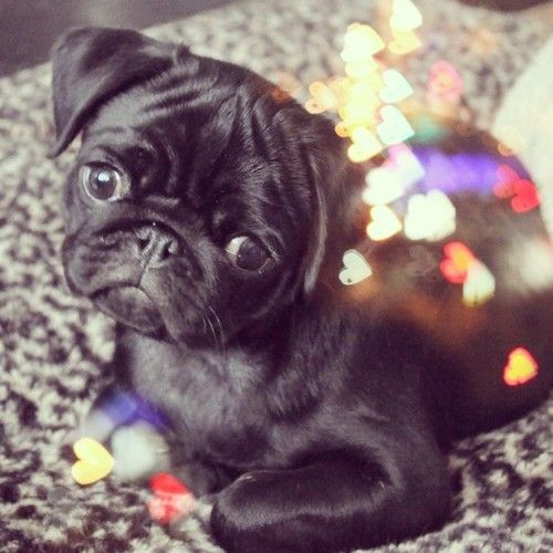 Oh dear gawd....i could have a million of these babies....❤