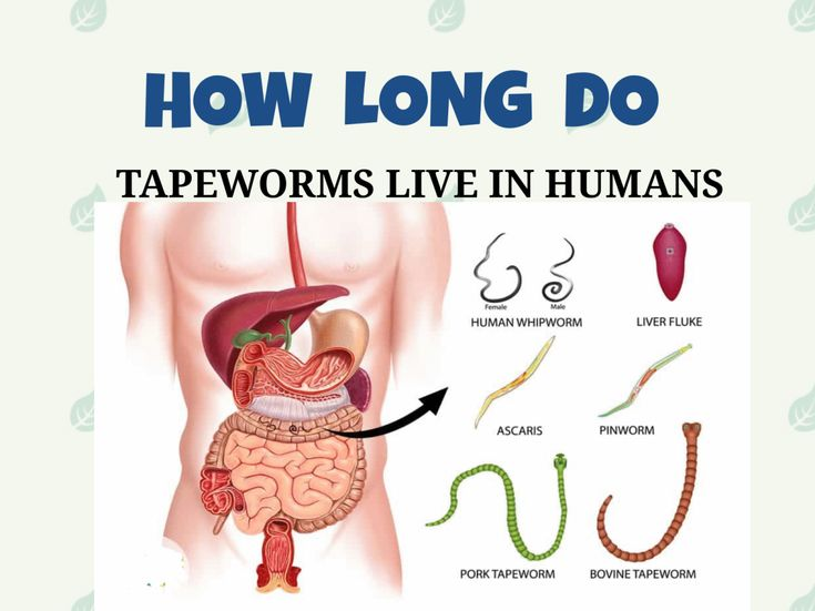 Tapeworms are flatworms that live in the intestines of some animals. An infection caused by consuming tapeworm eggs or larvae.