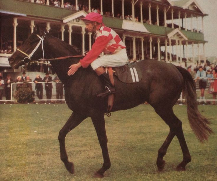 SILVER KNIGHT (NZ) Gr c 1967, Alcimedes (GB) - Cuban Fox. 49 starts, 7 wins, 11 placings. Winner 1971 VRC Melbourne Cup, NZ St Leger, ARG Great Northern St Leger etc. Sire of 1984 Melbourne Cup winner, Black Knight.