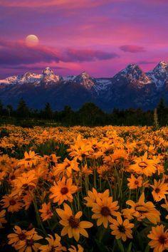 *Tetons Magic* Grand Tetons National Park, Wyoming