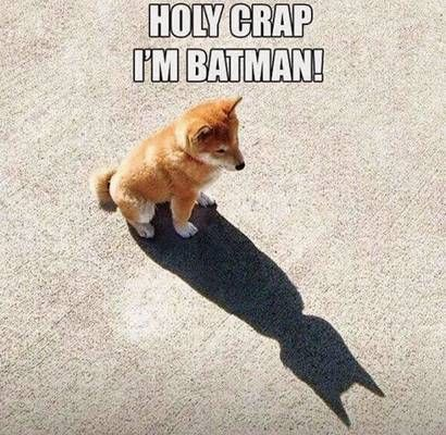 I'm Batman Funny Dog Pictures | Fun Things To Do When Bored