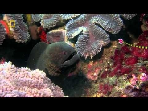 Самые опасные животные Юго Восточная Азия и Океания