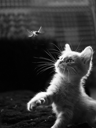 Dragonflies and inquisitive kittens. So adorable. #StyleKeeper #Glassons