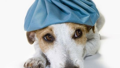 Medicina alternativa per animali - Pets - Greenstyle