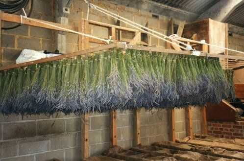How to Drying Lavender Flower Bunches