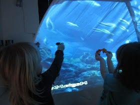 Vi har tillfört fiskar till vårt fisktält/akvarium.   Fiskarna används i leken och har fått barnen   att diskutera fiskarnas färger, ...