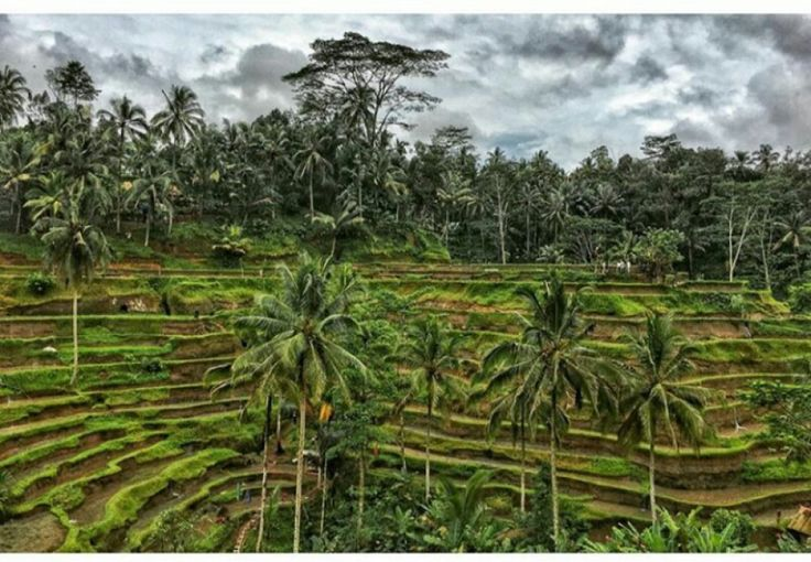 Tthis Tour Package we will invite you to explore Ubud for a day. There are a few favorite places tha
