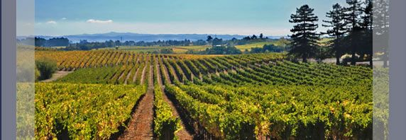 Californie - Pays des Vins