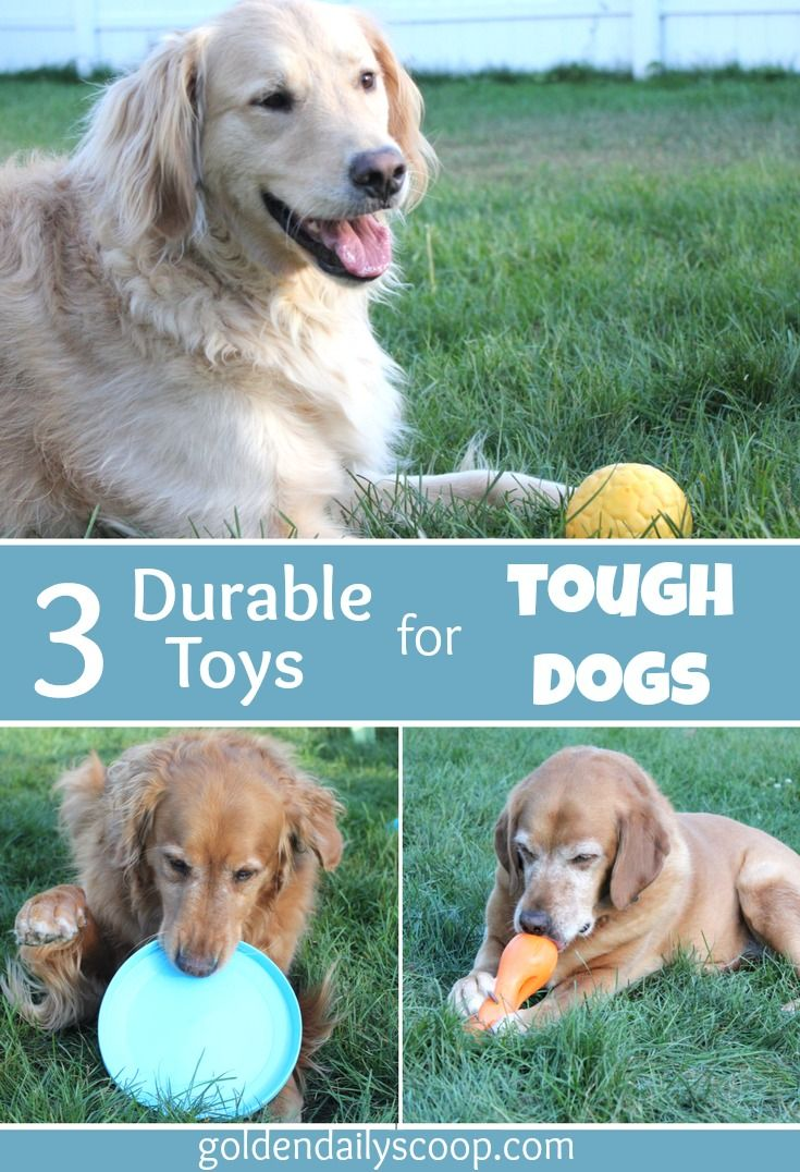 Three Durable Toys for Tough Dogs {sponsored}