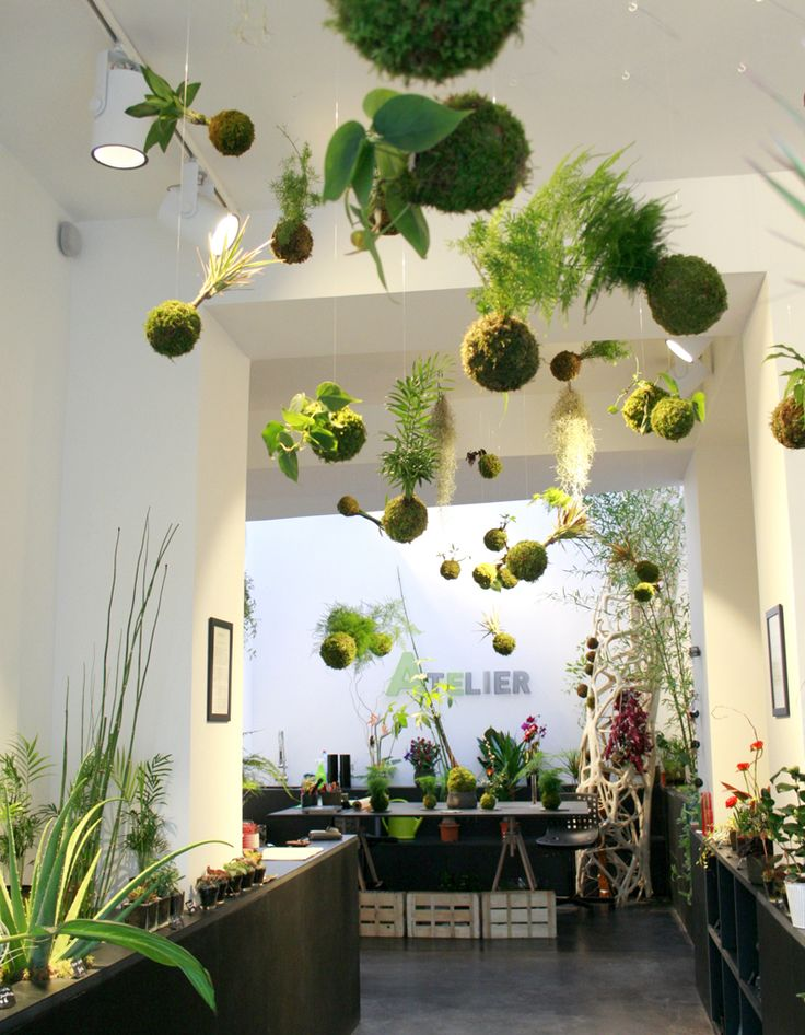 Les 25 meilleures id es de la cat gorie plantes suspendues for Decoration jardin interieur