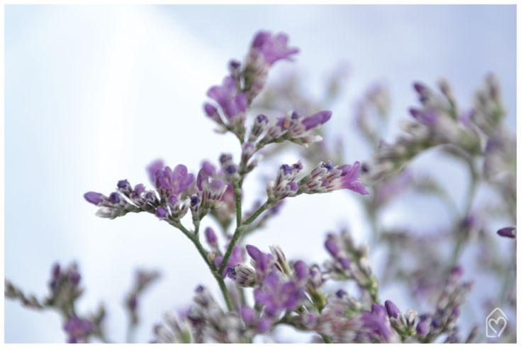 Cáspia - flor do dia | Dicas e inspirações para receber com charme e fazer um chá da tarde lindo entre amigas