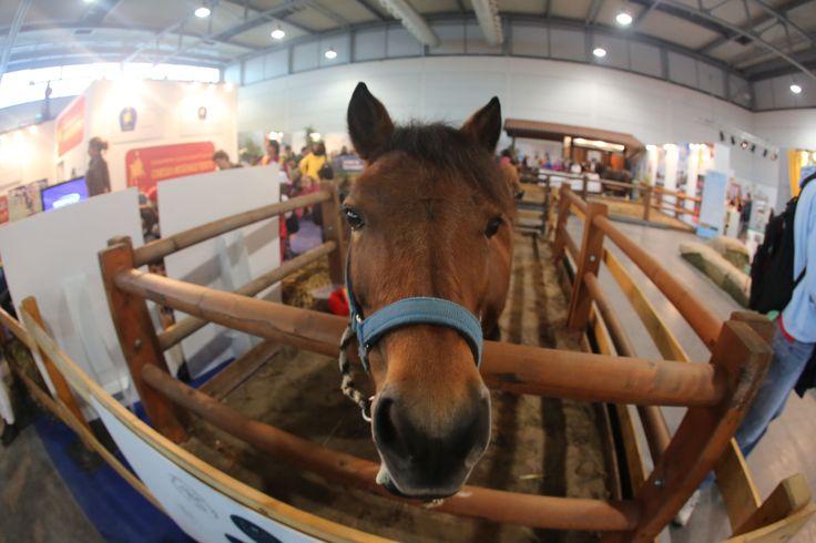 Salone del bambino 2014 #horses
