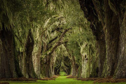 Cypress Forest, St. Simon Island, Georgia photo via superb