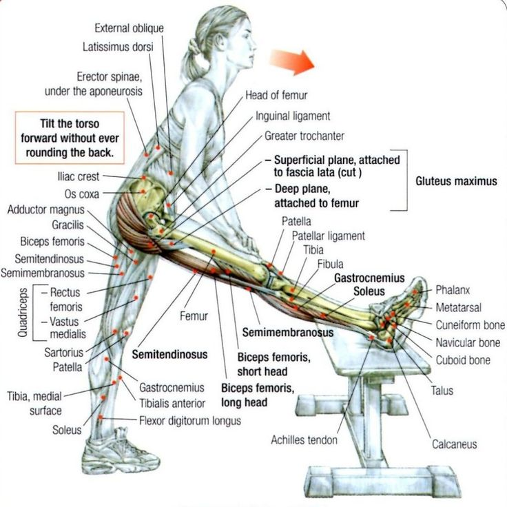 Stretching: How to Stretch the Hamstrings with Bench