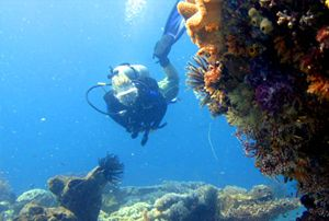 exploring one of my new dive sites around Rote island