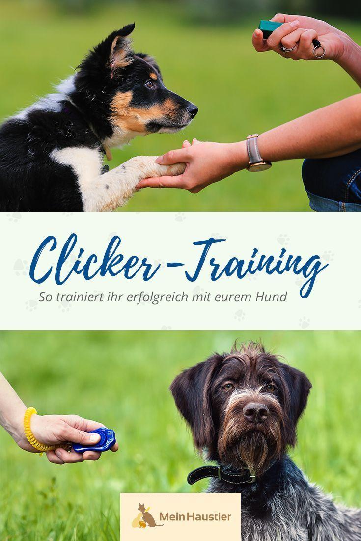 Tipps Tricks Erfolgreiches Clicker Training Fur Hunde Hundchen Training