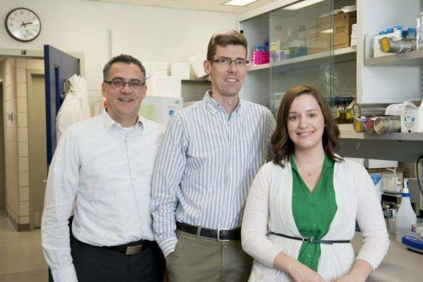 Bacterias que provocan inflamación de garganta pueden ser usadas para luchar contra el cáncer de colon