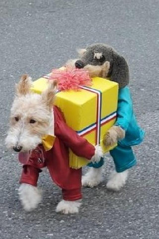 Hilarious Pet Halloween Costume