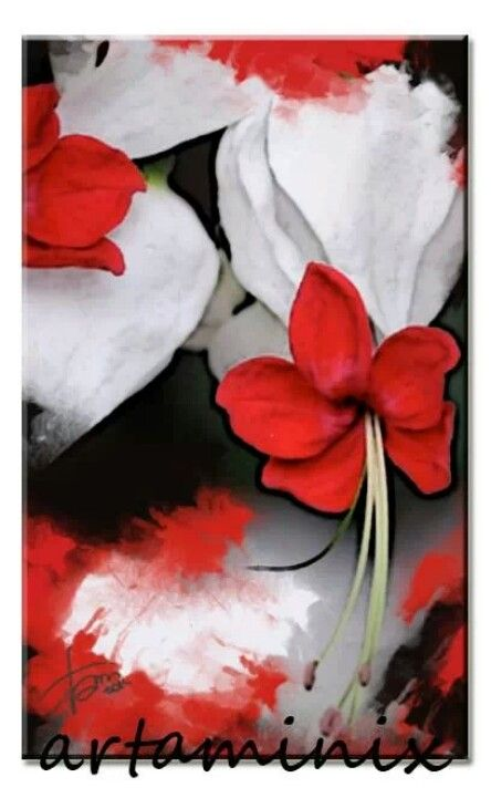 Red flowers #rosso #nature #handmade #modern #casa #design #arredo #orientale #italia #rt #love