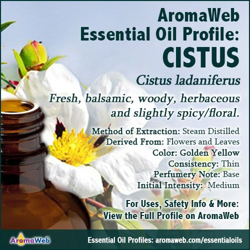 Cistus Essential Oil Profile | essential oils | Essential
