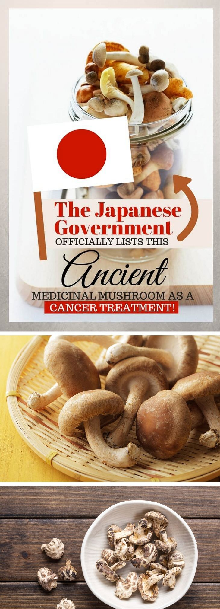 The Japanese Government Officially Lists This Ancient Medicinal Mushroom as a Cancer Treatment