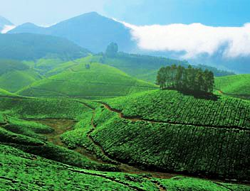 Munnar tea plantation, Kerala, India. I will retire here.