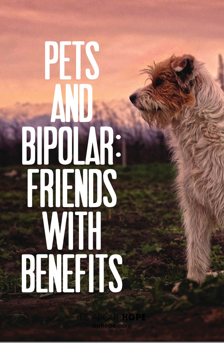 Dogs — and cats, birds and other critters — boost well-being in many ways.