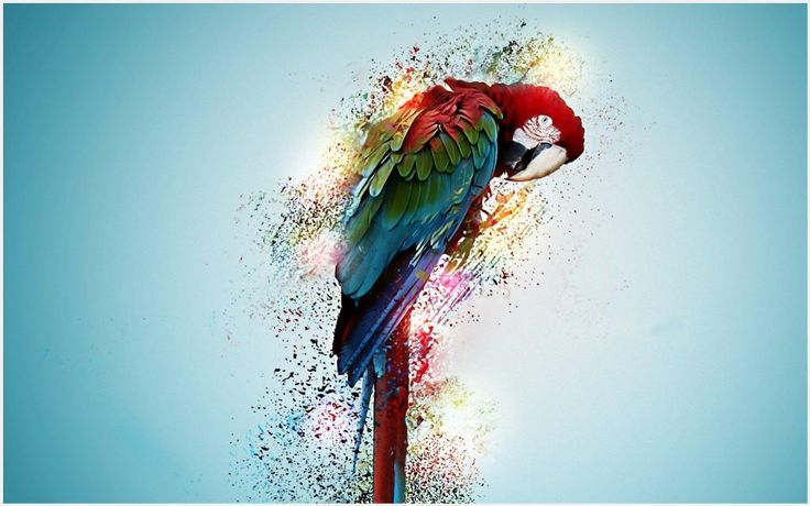 Beautiful Parrot Bird Wallpaper | beautiful parrot bird wallpaper 1080p, beautiful parrot bird wallpaper desktop, beautiful parrot bird wallpaper hd, beautiful parrot bird wallpaper iphone