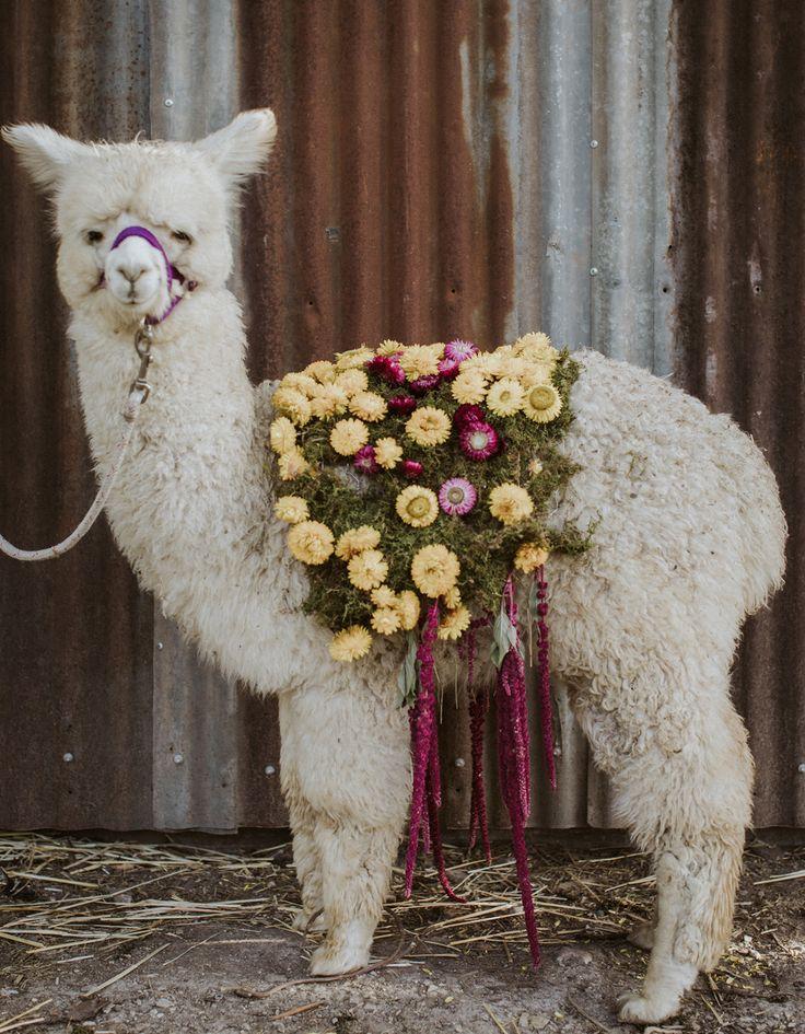 floral baby alpaca wedding