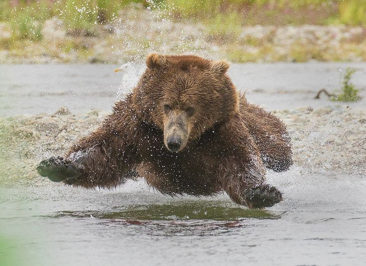 Alaska Fishing Bears Tour with David Hemmings