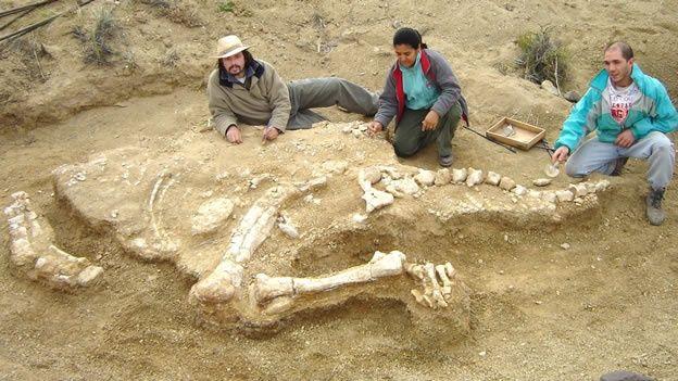 Eoabelisaurus mefi,(?)  http://nl.wikipedia.org/wiki/Eoabelisaurus