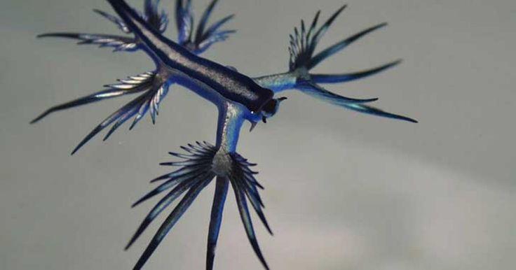 Los peces, moluscos o mamíferos marinos,necesitan de ciertas capacidades de supervivenciapara enfrentar a los depredadores y a las condiciones extremas que se pueden vivir en el agua.A continuación te presentamos a aquellos asombrosos animales marinos que se han adaptado a este medio generandosorprendentes habilidades: