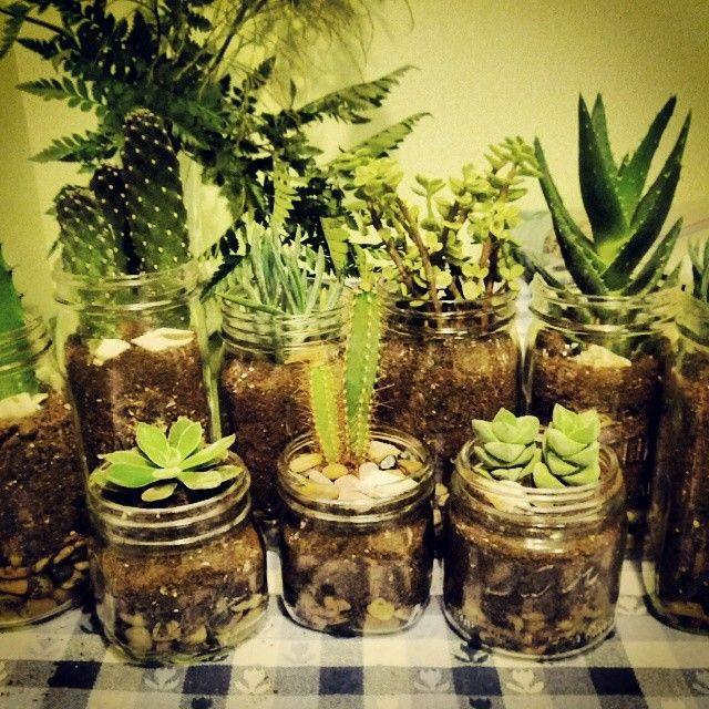 It's a jungle out there. #masonjar #cacti #cactus #diy #succulents #wilsonandlou