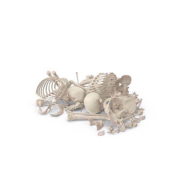 Skeleton Pile Of Bones Png Psd Images Bones Skeleton Elements