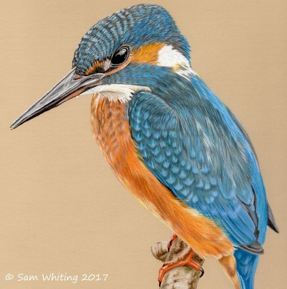Kingfisher Blank Greetings Card Art Card Notelet Etsy Kingfisher Art Greeting Card Art Card Art