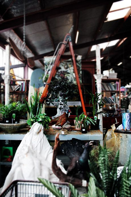 S A L V A G E D | The Interium | Junk and Disorderly 2015  Very British colonial! Loving the taxidermy botanical mix.