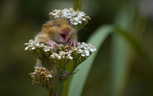DAwwwwMice, Happy Face, So Cute, Hamsters, So Happy, Baby Animal, Smile, So Funny, Flower