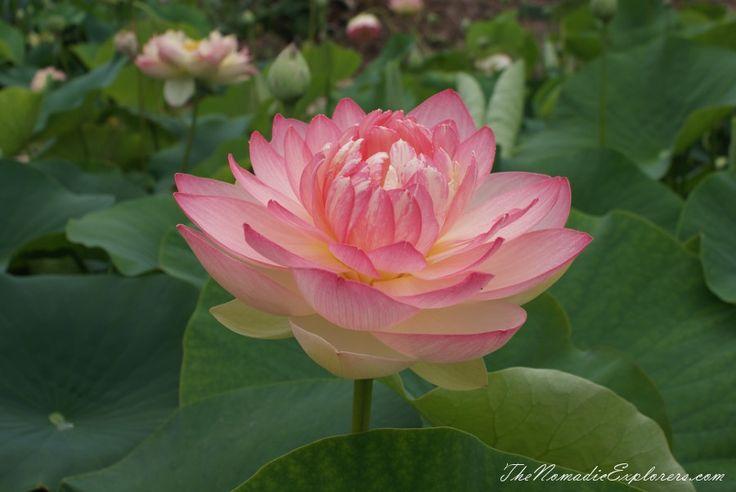 A walk in Blue Lotus Water Gardens