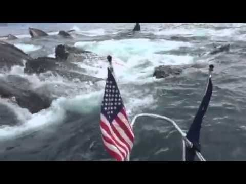 Whale Watcher Freaks Out When Humpbacks Breach Next to His Boat - amazing