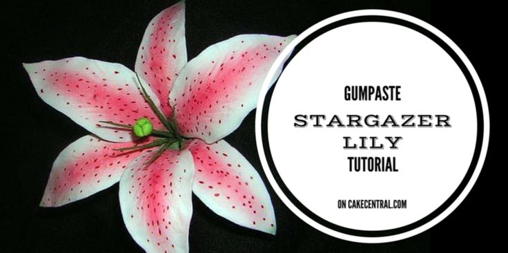 How To Make A Gumpaste Stargazer Lily (Asian Lily) - CakeCentral.com