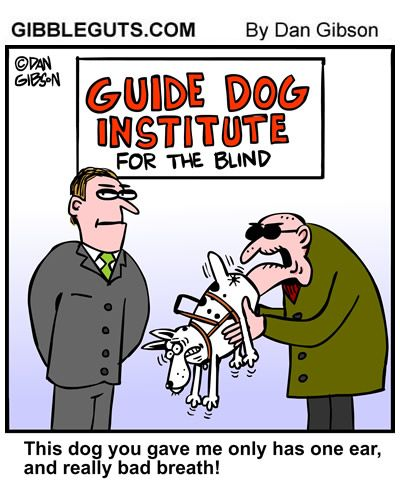 Dog Grooming West Drayton